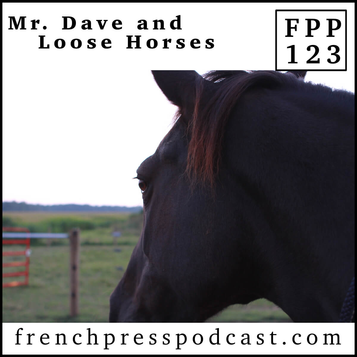 Mr. Dave and Loose Horses